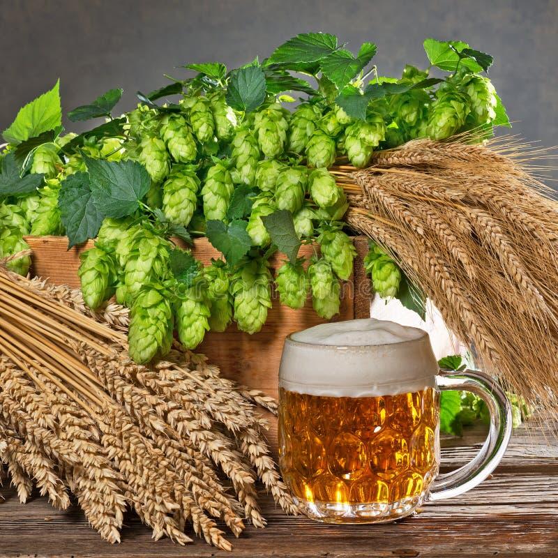Conos de salto y materia prima para la producción de la cerveza imagen de archivo