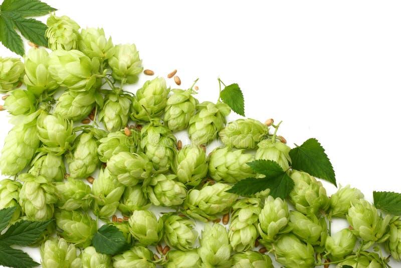Conos de salto y oídos del trigo aislados en el fondo blanco Cerveza que elabora los ingredientes Concepto de la cervecería de la fotos de archivo