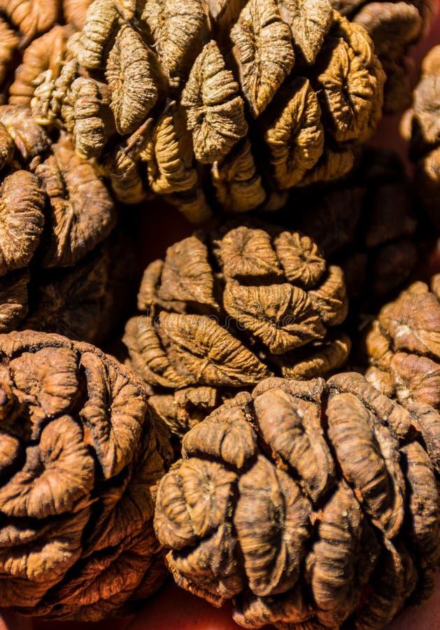 Conos del árbol de la secoya gigante, bosque gigante, California los E.E.U.U. imagenes de archivo