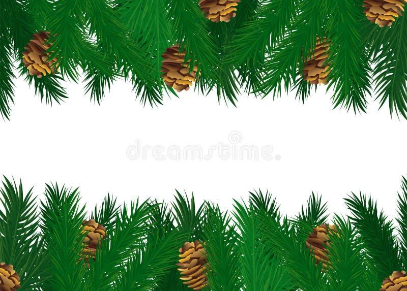 Conos del árbol de pino en vector verde de las ramas de la picea libre illustration