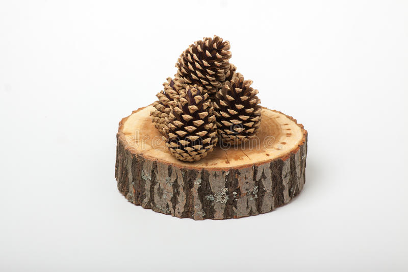 Conos del cedro en la rebanada de madera, fotografía de archivo