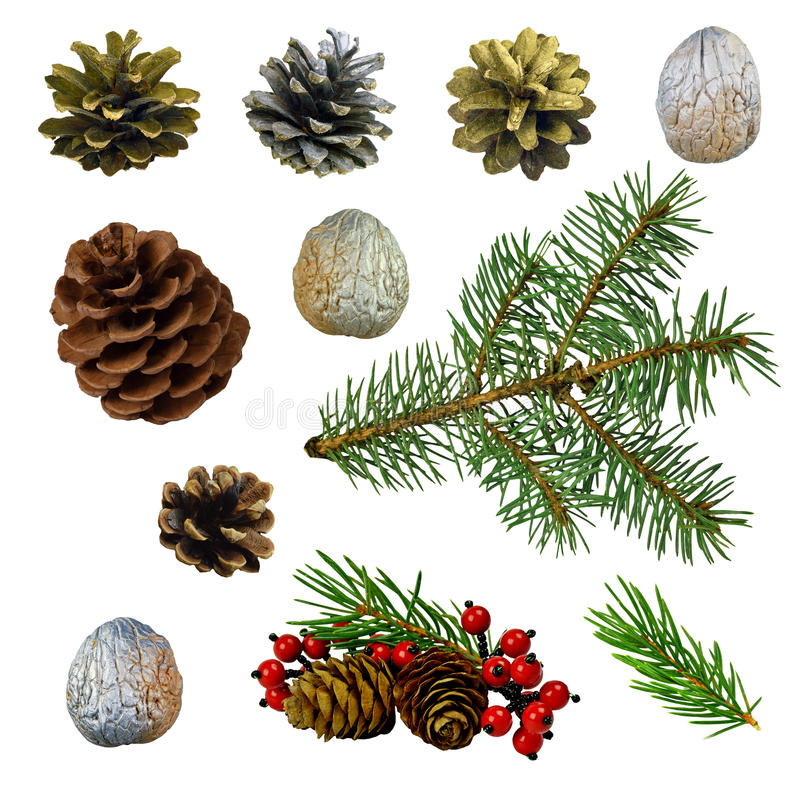 Conos del cedro y del pino, bayas, ramas spruce, nueces W aislado fotografía de archivo libre de regalías