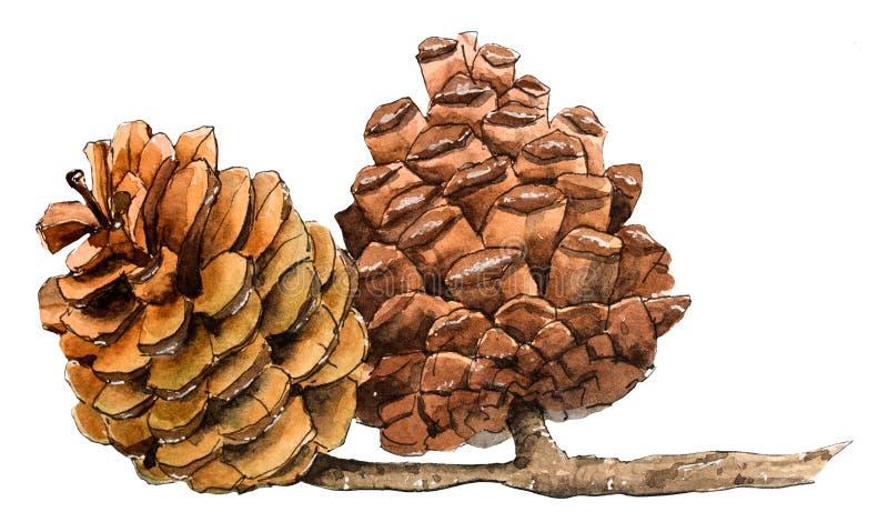 Conos del fuego, pinecone Ilustraci?n drenada mano stock de ilustración
