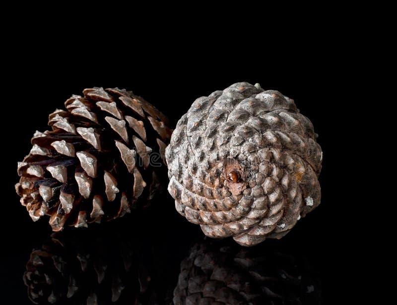 Conos del pino en el negro, reflejado fibonacci fotografía de archivo