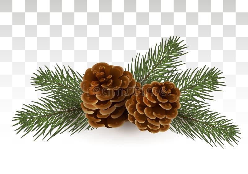 Conos en ramas spruce Composición de la Navidad Un pequeño festivo libre illustration