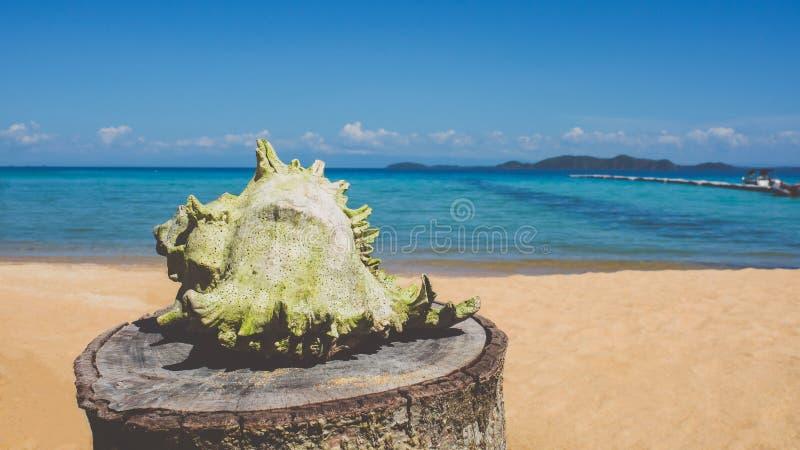 Conque blanche sur la plage photographie stock libre de droits