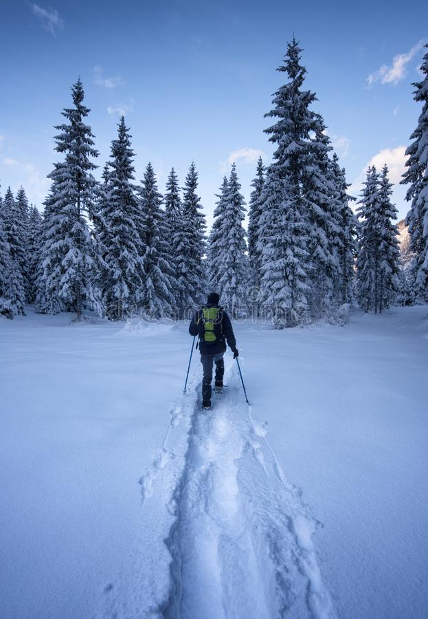 Conquering wilderness. A white covered forest in the Alps royalty free stock image