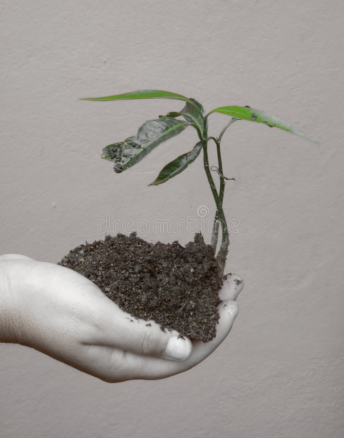 Download Conscience écologique photo stock. Image du accroissement - 2128452