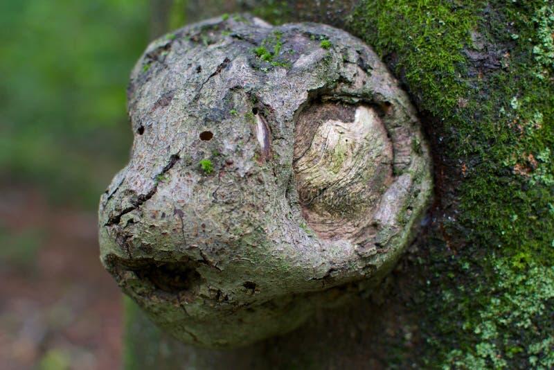 Conseguenza dal tronco di albero come testa della scimmia immagini stock libere da diritti