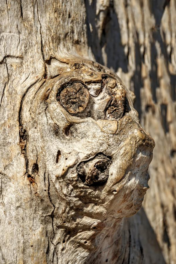 Conseguenza strutturale astratta dell'albero di eucalyptus immagini stock libere da diritti