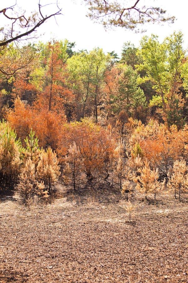 Conseguenze di incendio forestale profondo immagini stock