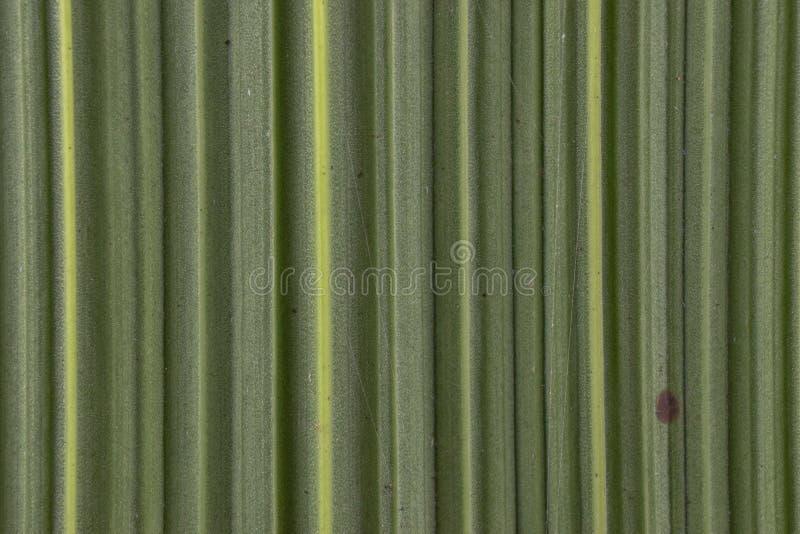 conseil en bambou de texture de modèle de fond de feuille de nature photographie stock