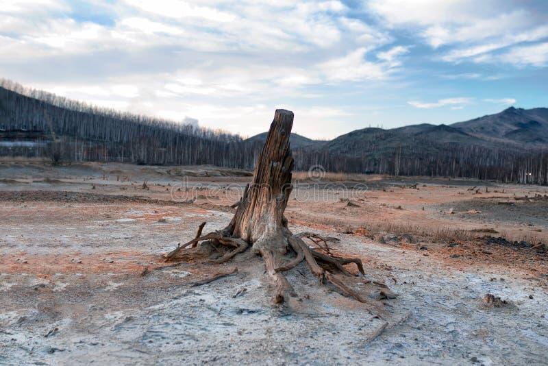 A consequência da catástrofe ecológica Traços do cobre na terra imagem de stock