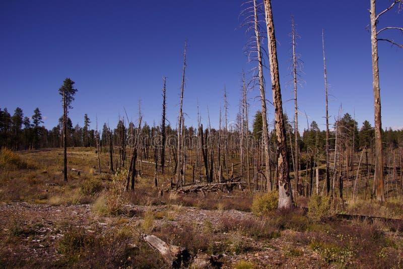 Consequências de um incêndio florestal de 2000 fotografia de stock
