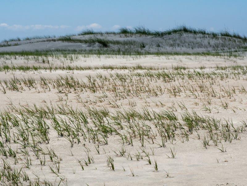 Conserva de Rachel Carson Wildlife em Beaufort, North Carolina fotos de stock royalty free