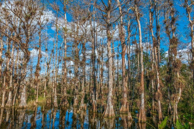 Conserva nacional grande de Cypress Florida sul EUA imagem de stock