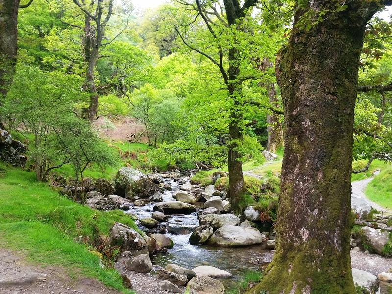 Conservation of biodiversity and landscape in Wicklow Mountains National Park royalty free stock photo