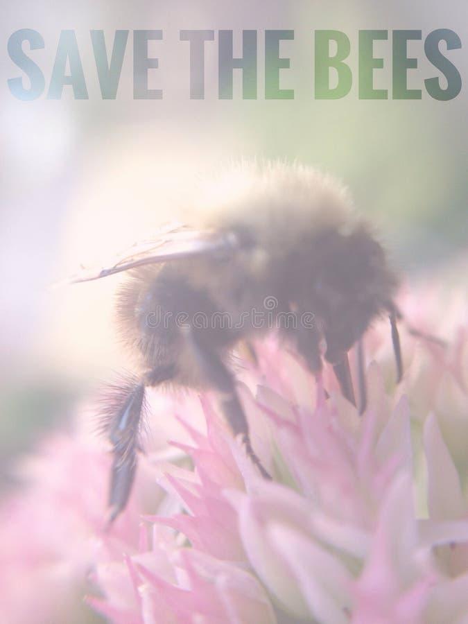 Conservi le api fotografia stock