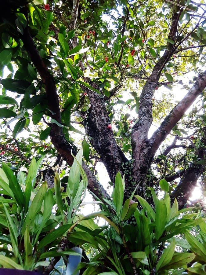Conservi un albero fotografia stock