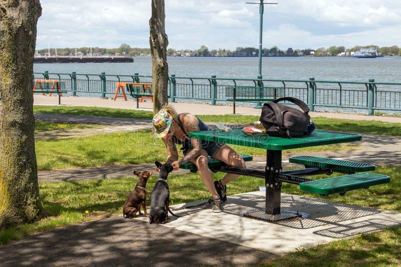 Considérez l'après-midi ensoleillé de parc de sur le fleuve au printemps Sorel-Tracy photos libres de droits