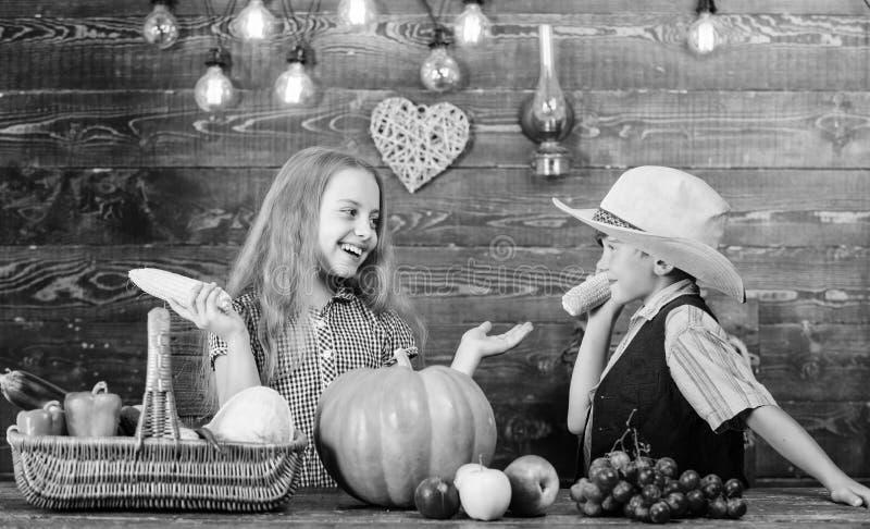 Considerado responsable de tareas diarias de la granja Las verduras del muchacho de la muchacha de los granjeros de los ni?os cos imagen de archivo libre de regalías