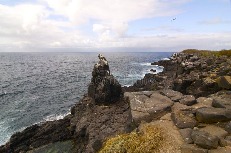 Console de Galápagos - Isla bonito Santa Fé fotos de stock