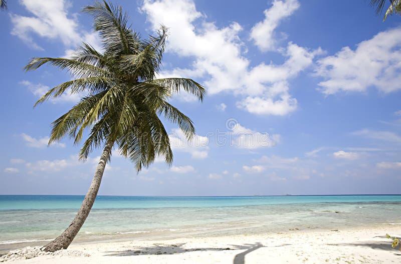 Console de Maldives imagem de stock