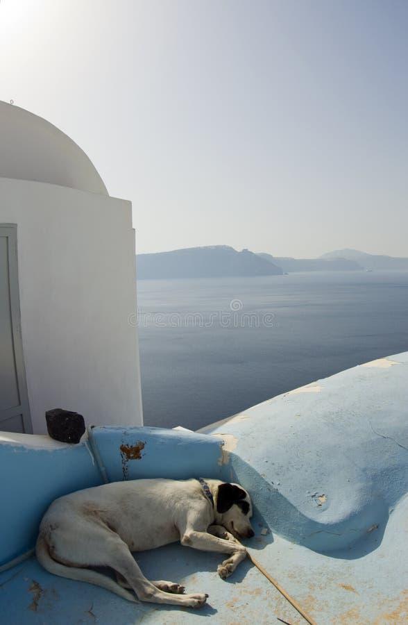 Consoles gregos do sono do cão fotografia de stock