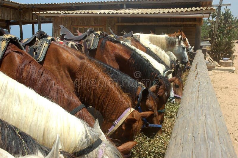 Consommation de chevaux image stock