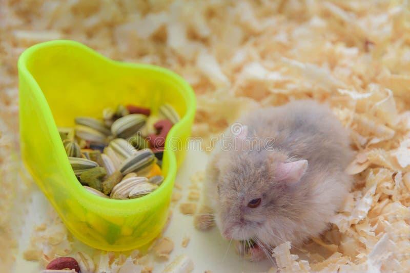 Consommation de hamster photo libre de droits
