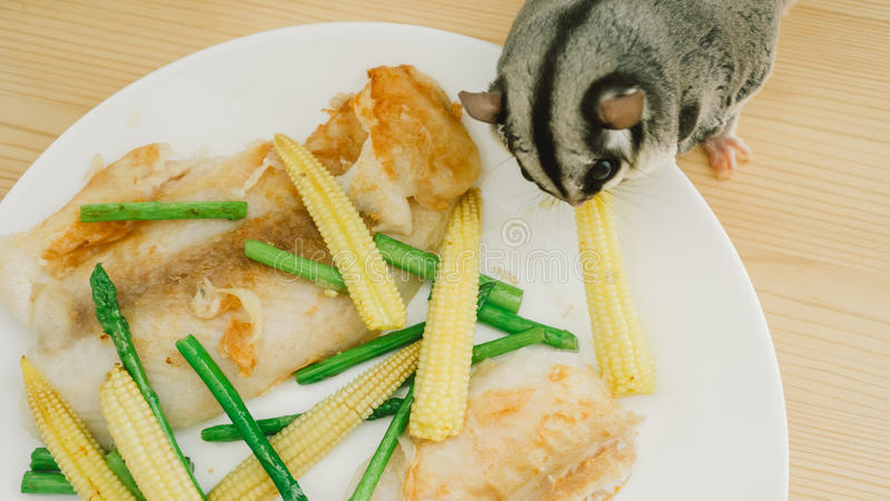 Consommation de Sugar Glider images stock
