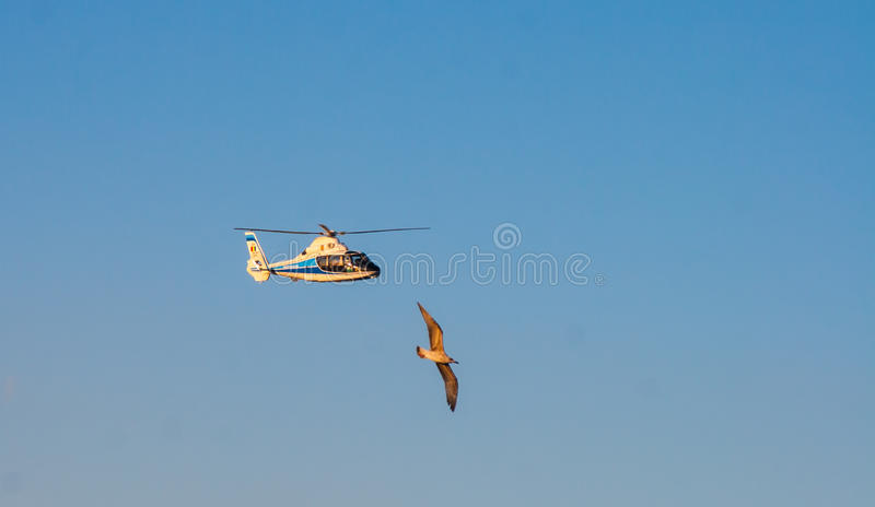 CONSTANTA, ROMANIA - AUGUST 21, 2010. bird flies close to the helicopter royalty free stock photography