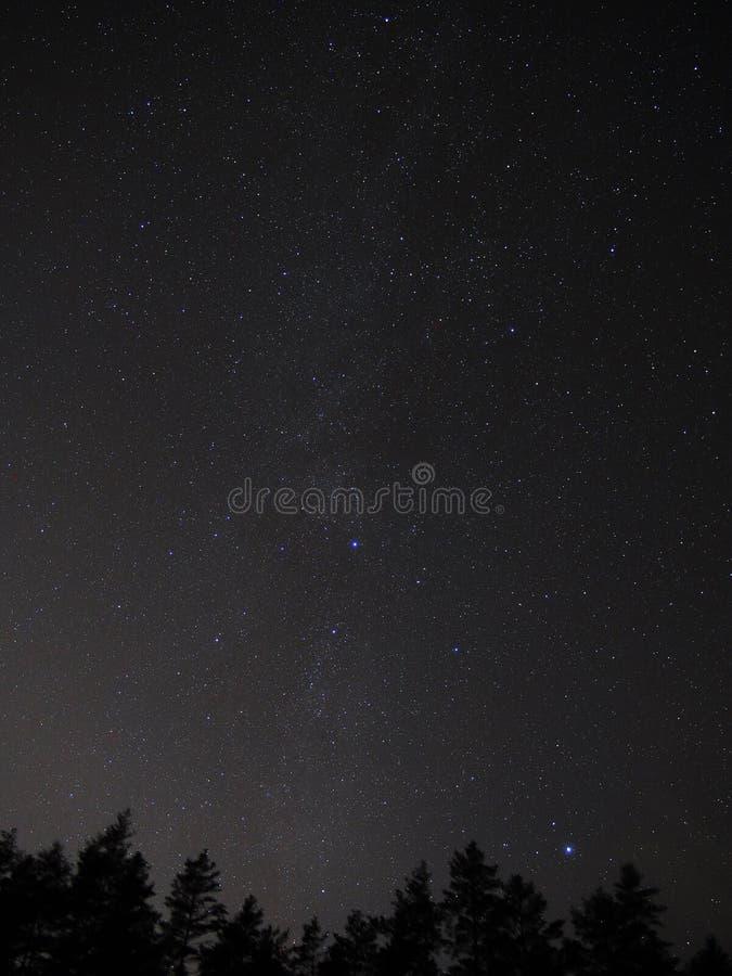 A constelação do Cygnus protagoniza no céu noturno fotografia de stock