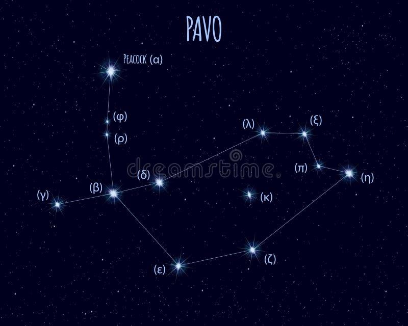 Constelação do Pavo, ilustração do vetor com os nomes de estrelas básicas ilustração stock