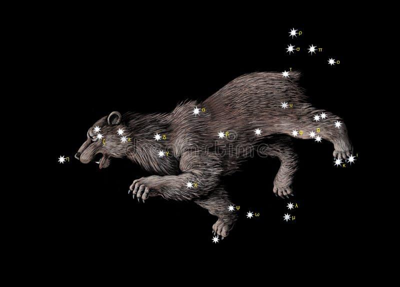 Constelação o grande urso ilustração do vetor