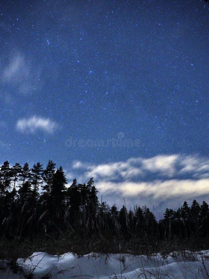 Constelaciones de Perseus de las estrellas del cielo nocturno sobre bosque del invierno fotos de archivo libres de regalías