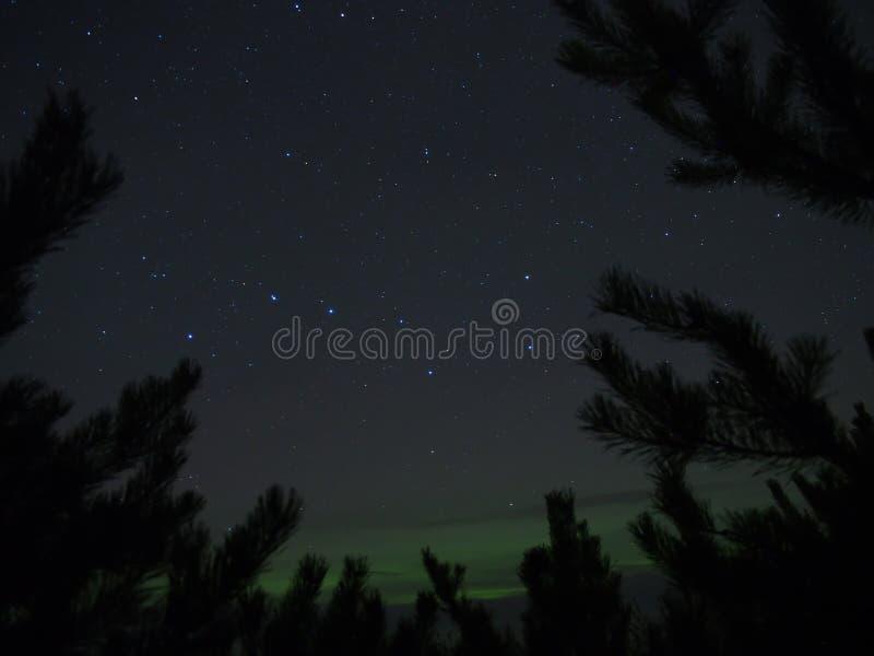 Constellation de grand huit (commandant d'Ursa), arbres et lumières polaires de l'aurore photos stock