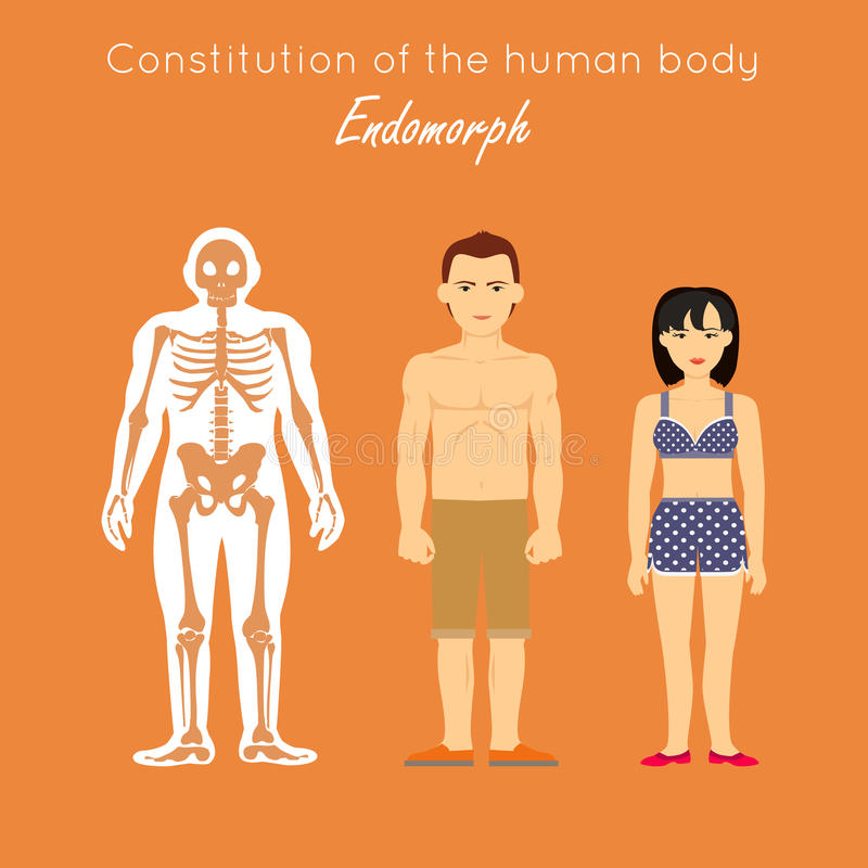 Constitution de corps humain Endomorph Endomorphe illustration de vecteur
