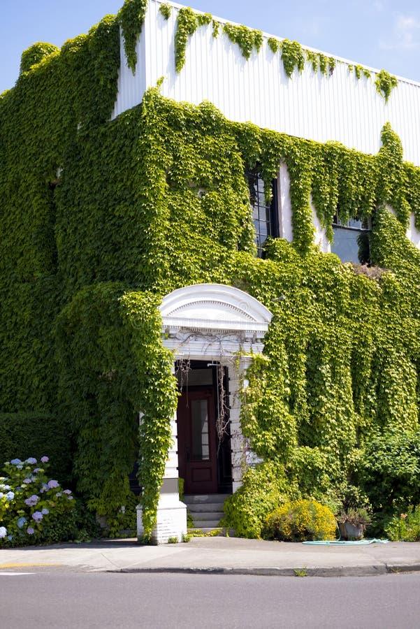 Construção branca com o pórtico coberto de vegetação com a hera de ondulação verde fotos de stock royalty free