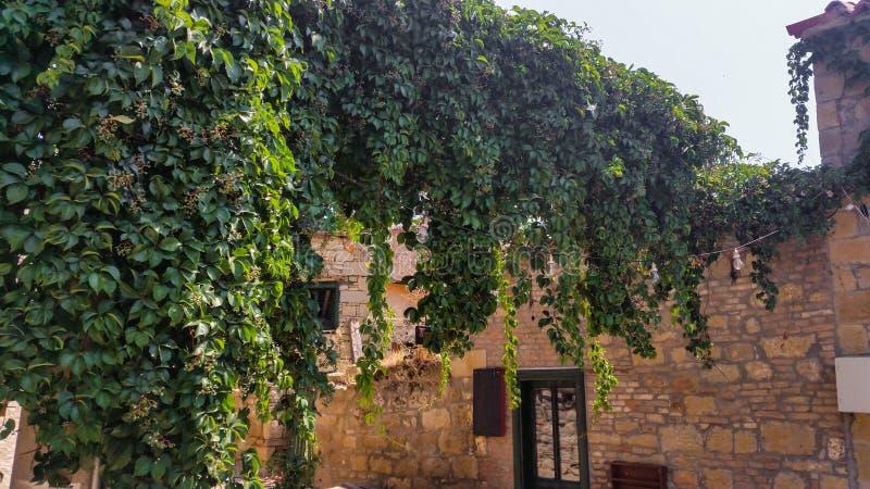 Construção de pedra velha com um arco da vegetação imagem de stock