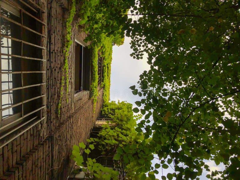 Construção de tijolo velha alta ao lado das árvores verdes contra o céu Construindo parcialmente frondoso foto de stock royalty free