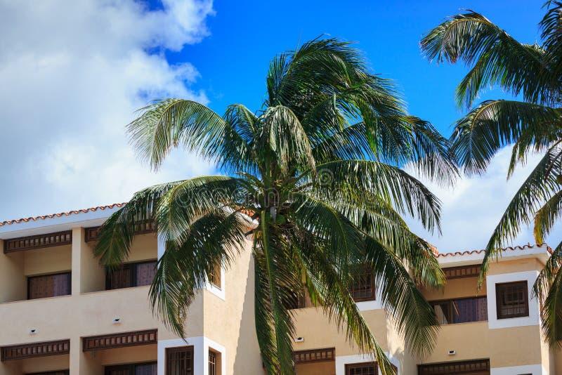Construção e palmeiras foto de stock royalty free