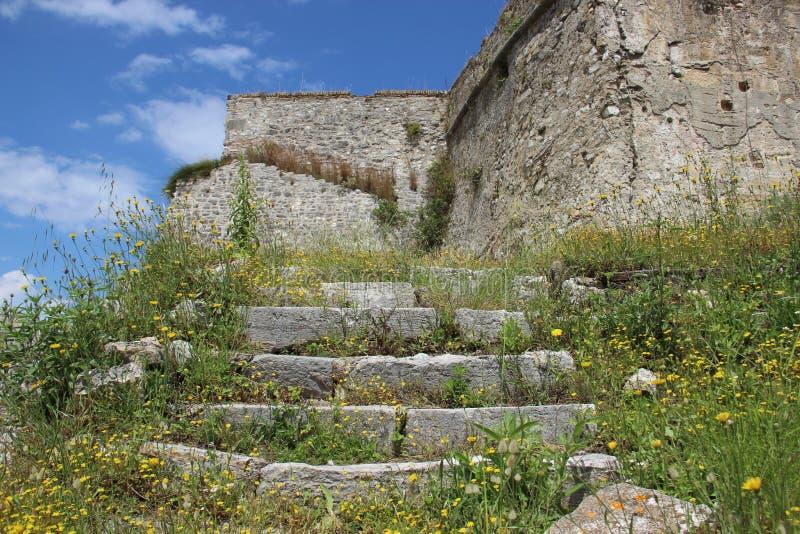 Construção histórica velha com brotamento de flores selvagens foto de stock