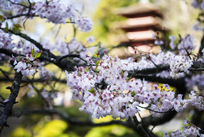 Construção japonesa no jardim fotografia de stock