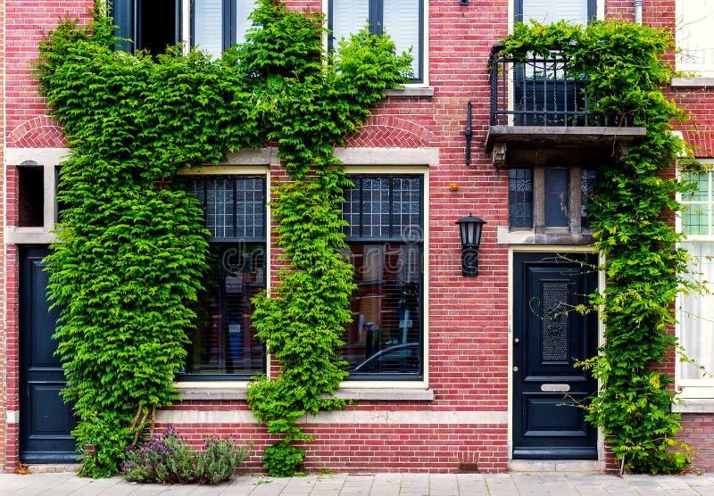 A constru o verde cobriu a hera imagem de stock imagem for Casa moderna zurigo