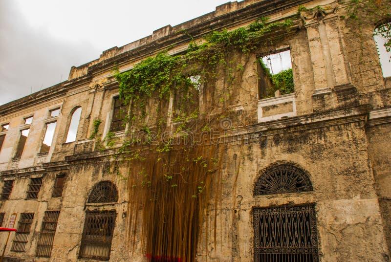 Construção velha abandonada, coberto de vegetação com as videiras Manila, Filipinas imagem de stock royalty free