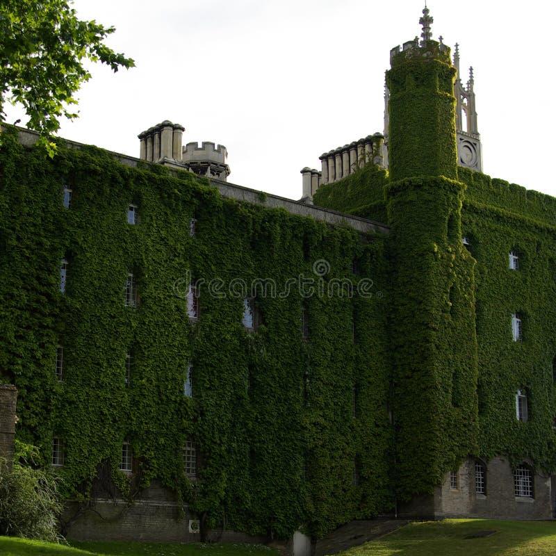 Construção velha em Inglaterra crescida acima com folhas verdes fotos de stock