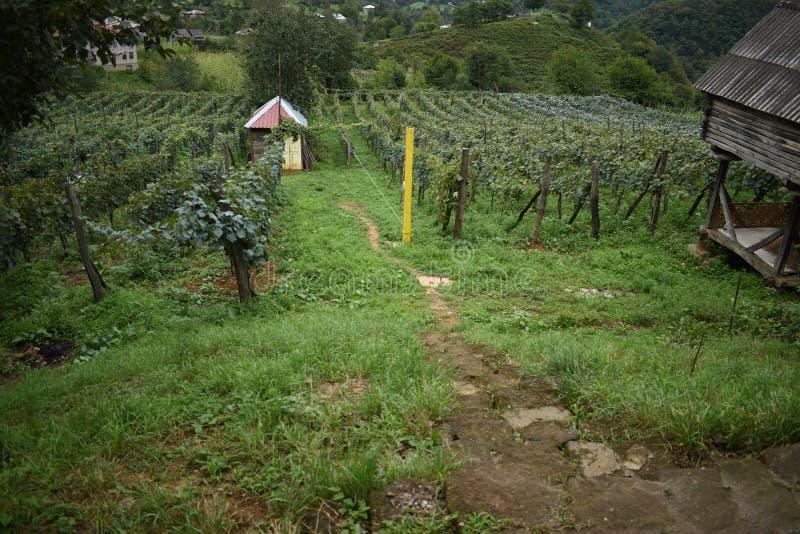 Construções velhas na exploração agrícola da uva foto de stock royalty free