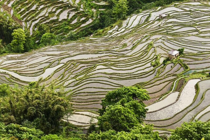 Construcción de terrazas del arroz-arroz de Yunnan fotografía de archivo