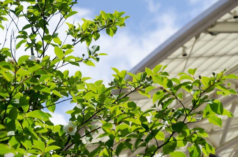 Construcción metálica blanca detrás del follaje verde rico con el cielo azul en el fondo imagenes de archivo